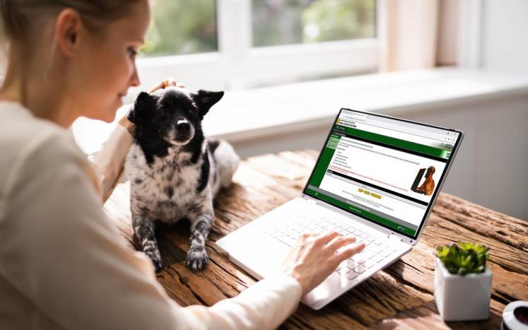 Dog Licensing Registration